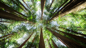 Muir Woods National Monument. Outdoor, nature, tree, environment